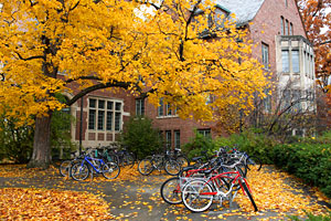 Bicycles in leaves on campus